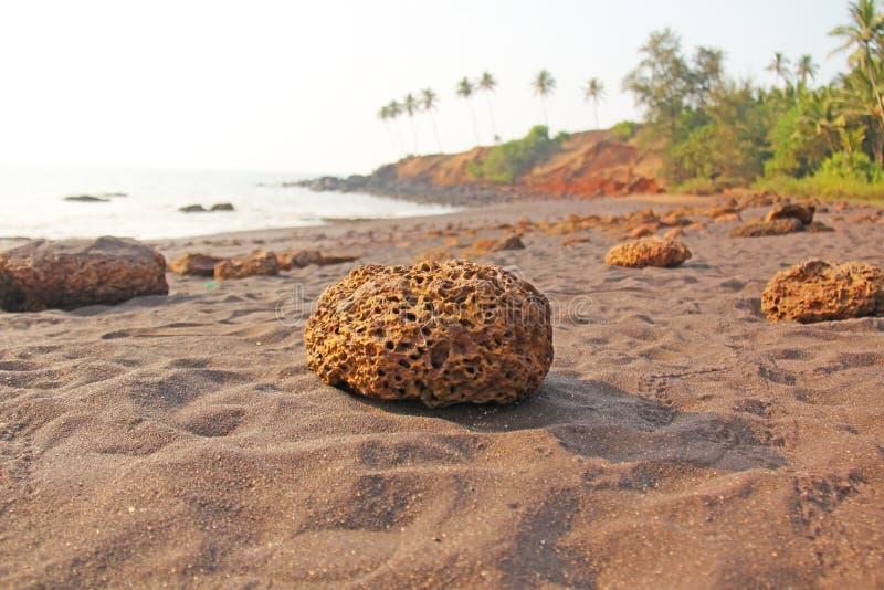 Plaża z czarnymi drzewkami palmowymi i piaskiem Ciemnego brązu powulkaniczny piasek a zdjęcie stock
