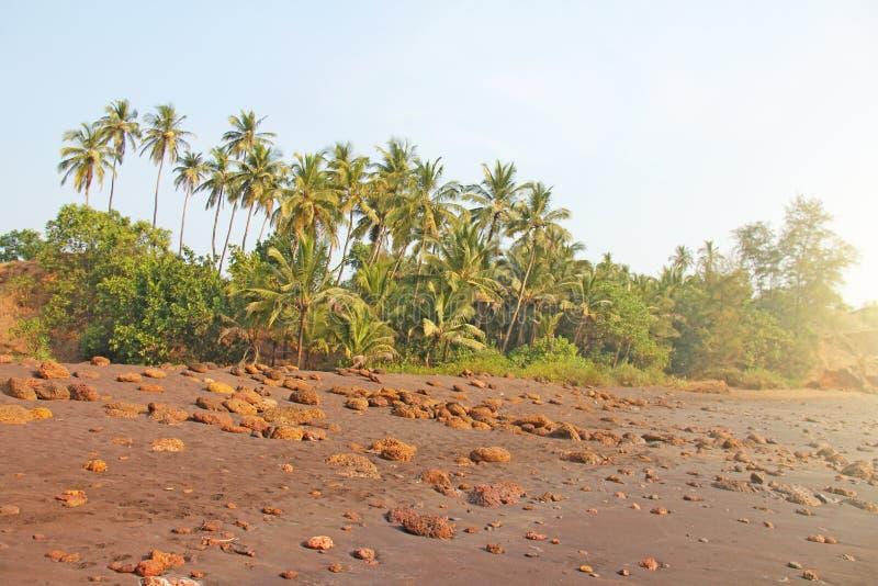 Plaża z czarnymi drzewkami palmowymi i piaskiem Ciemnego brązu powulkaniczny piasek a obraz stock
