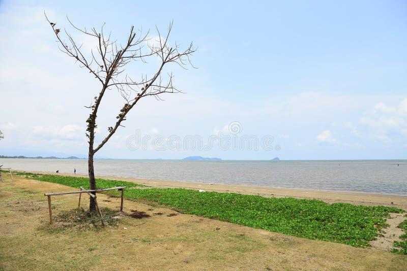 Plaża z drzewem i trawą z niebieskim niebem fotografia royalty free