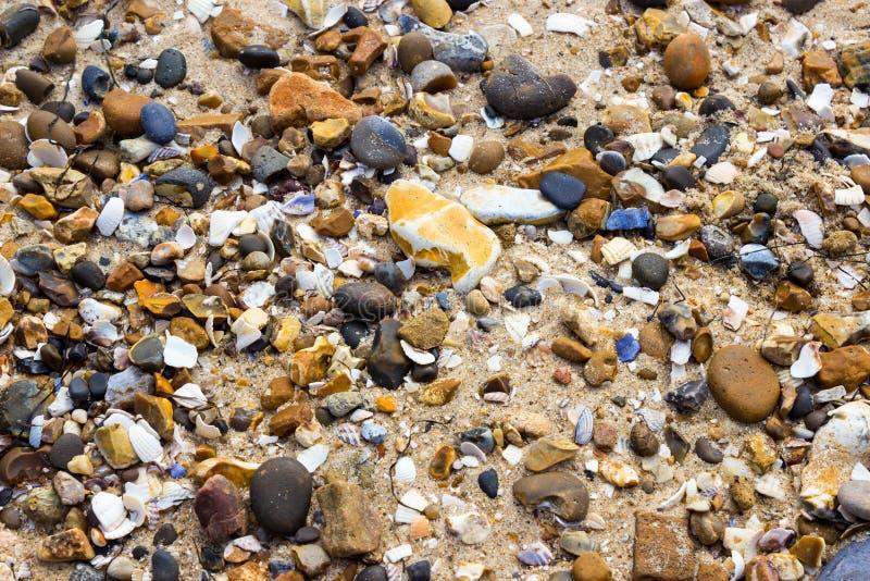 Plaża z otoczakami i skorupami obraz royalty free