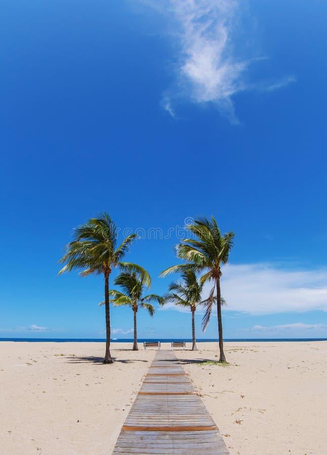 Plażowa ścieżka z palmami obrazy stock