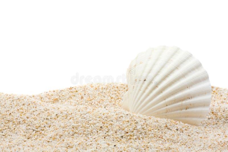plażowa denna skorupa obrazy stock