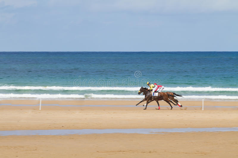 Plażowa końska rasa obraz stock