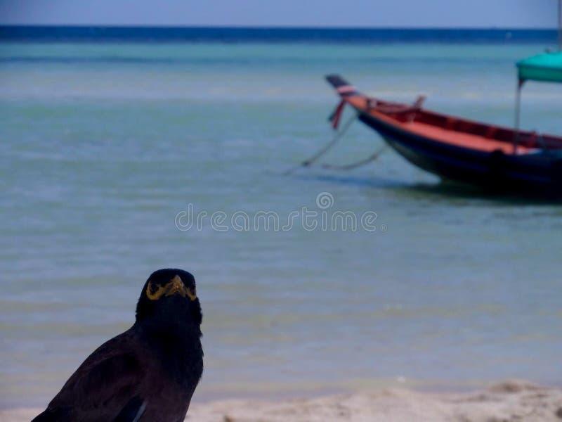 Plażowa Tajlandia longtail łodzi natura obrazy royalty free