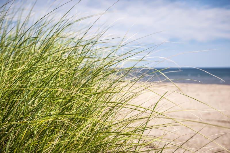 Plażowa trawa obraz stock