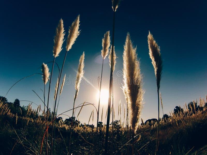 Plażowa trawa zdjęcie royalty free
