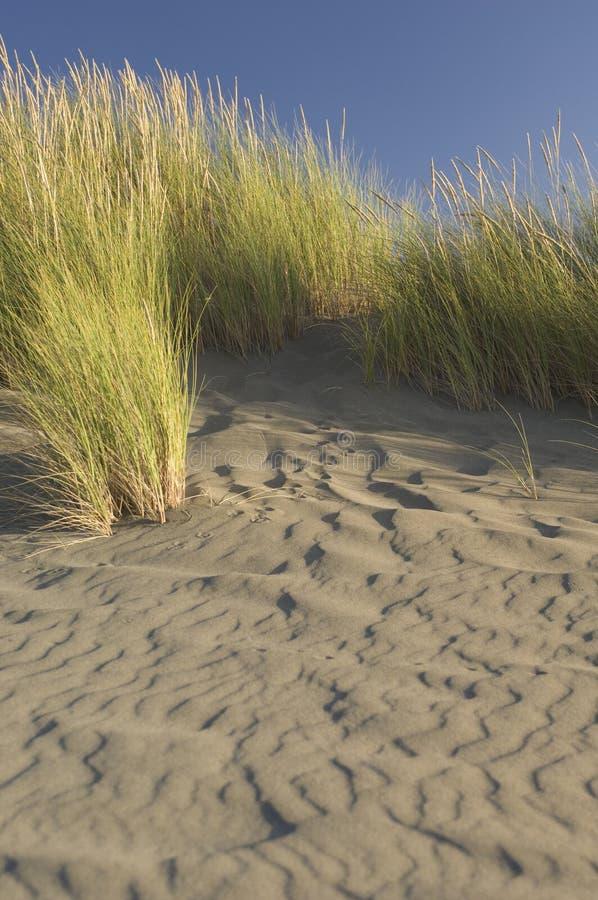 Plażowa trawa na potarganej plaży zdjęcie royalty free