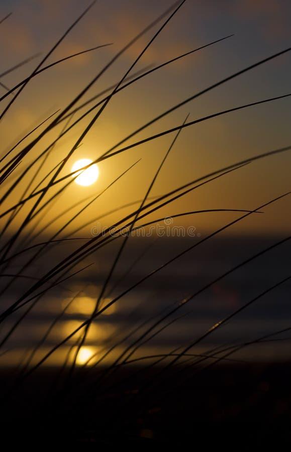 Plażowa trawy sylwetka przy zmierzchem zdjęcia stock