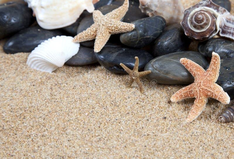 plażowe ładne piaskowate denne skorupy obraz stock