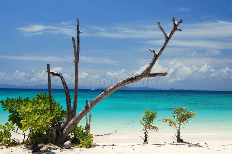plażowe karpy fotografia royalty free