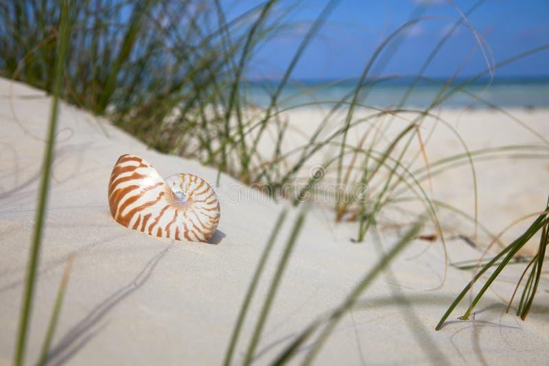 plażowego trawy łodzika denna skorupa tropikalna obraz stock