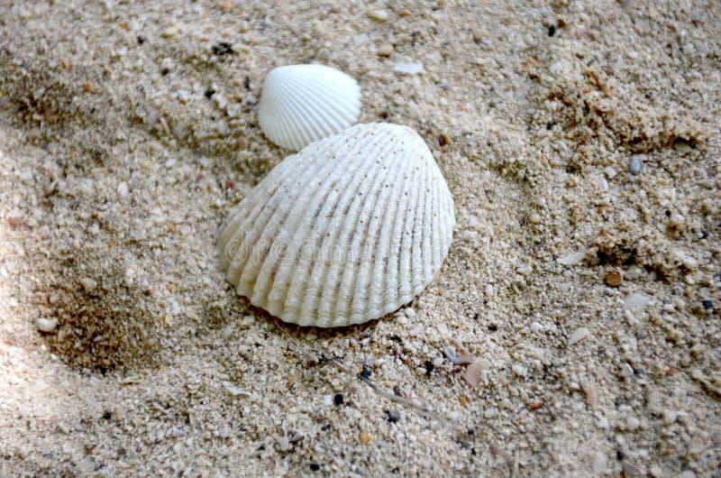 plażowej brzegowej cibory śródziemnomorska piaska kamieni lato kipiel obrazy stock