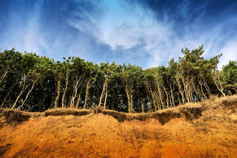 Plażowej erozi i Spadać drzewa zdjęcia royalty free
