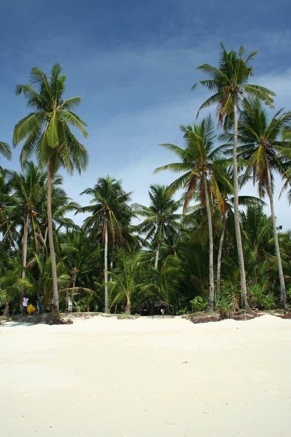 plażowi Boracay Philippines palmowi tropikalnych drzew zdjęcie royalty free