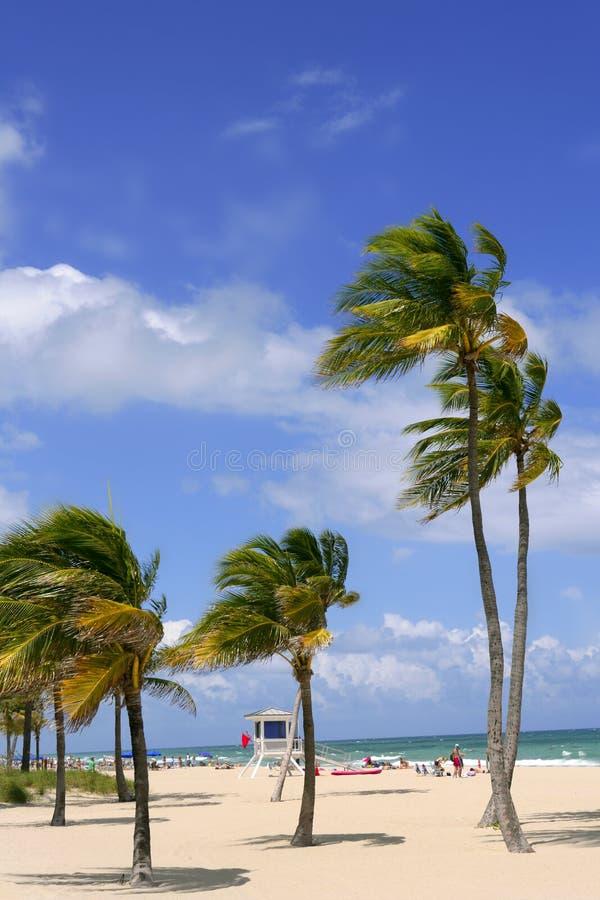 plażowi fortu lauderdale drzewka palmowe tropikalni obrazy stock
