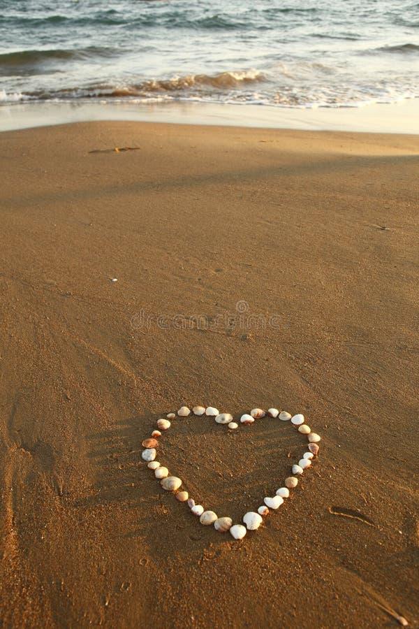 plażowi kierowi mussels obrazy royalty free