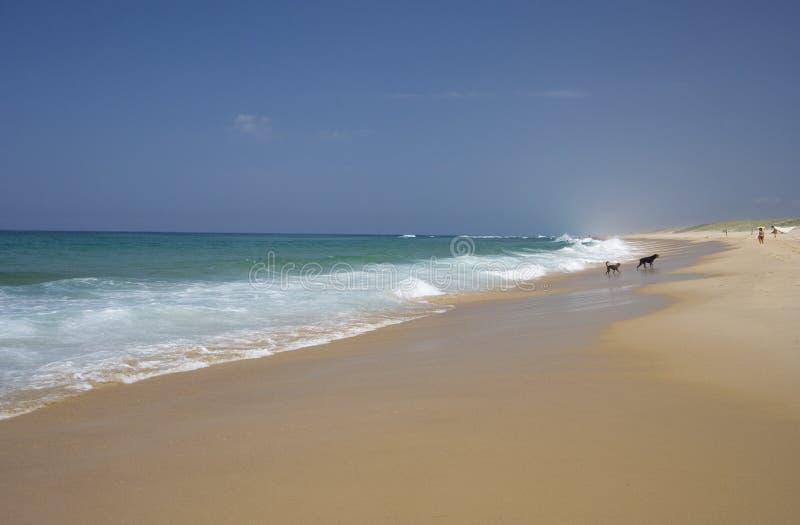 plażowi kilka osób obrazy royalty free