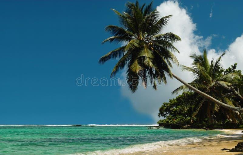 plażowi palmowi królewscy drzewa obraz royalty free