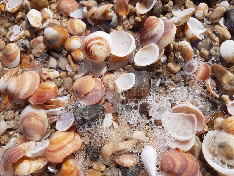plażowi seashells obrazy royalty free