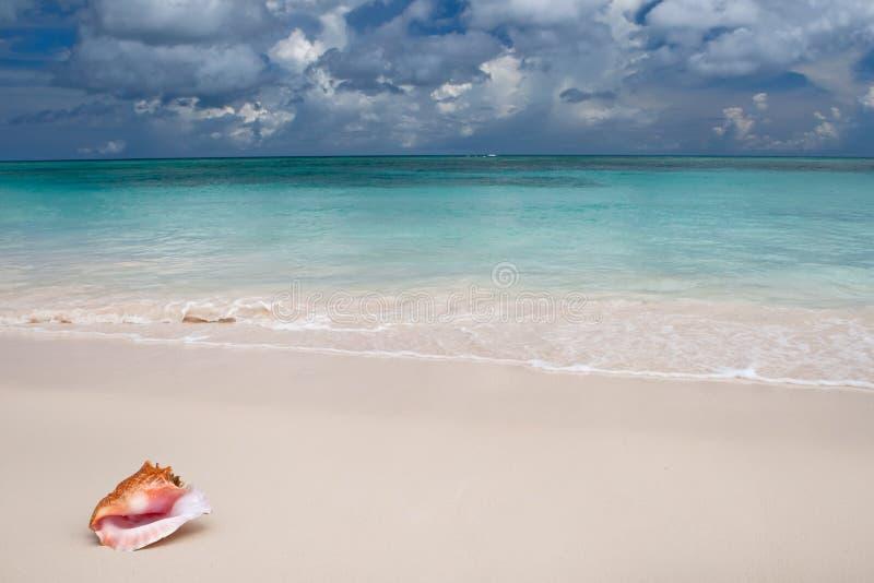 plażowy beżowy błękitny pobliski oceanu piaska skorupy biel zdjęcie stock