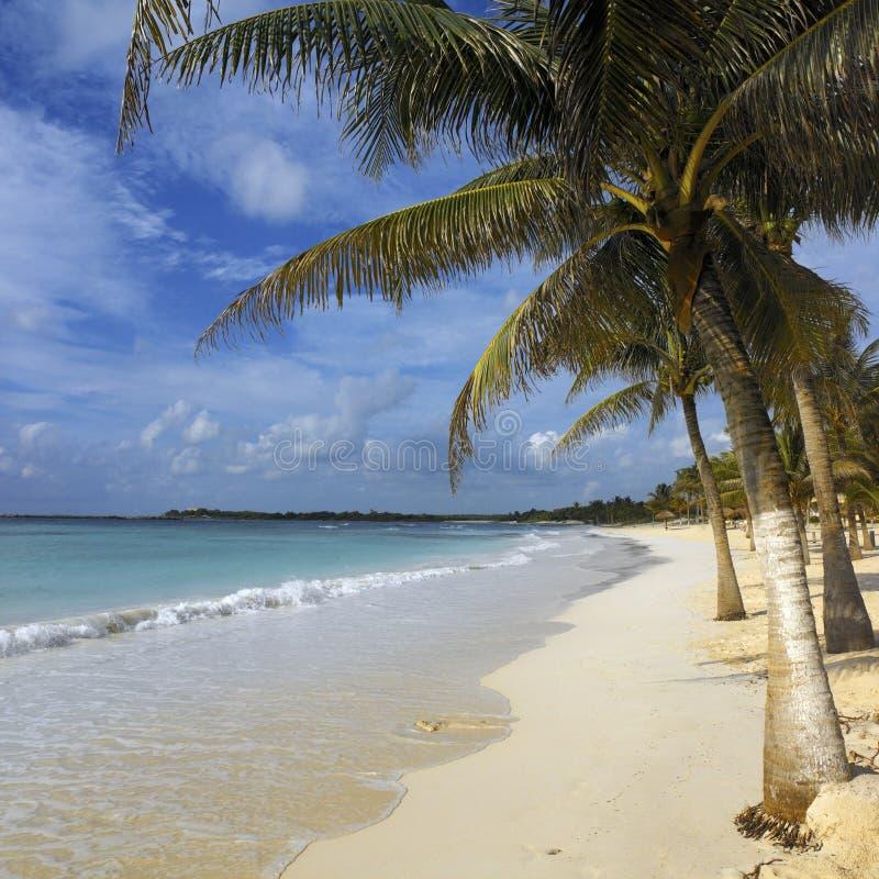 plażowy Cancun Mexico tropikalny obraz royalty free