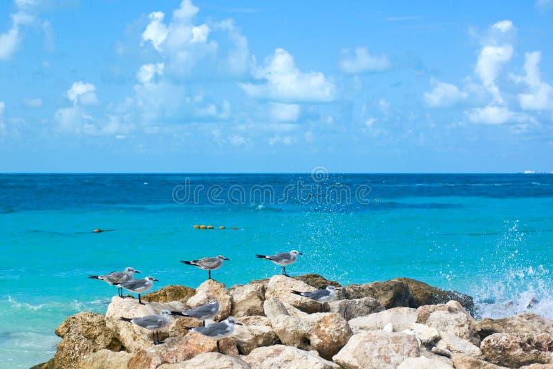 plażowy Cancun morza turkus zdjęcia royalty free