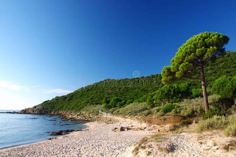 plażowy Corsica zdjęcia royalty free