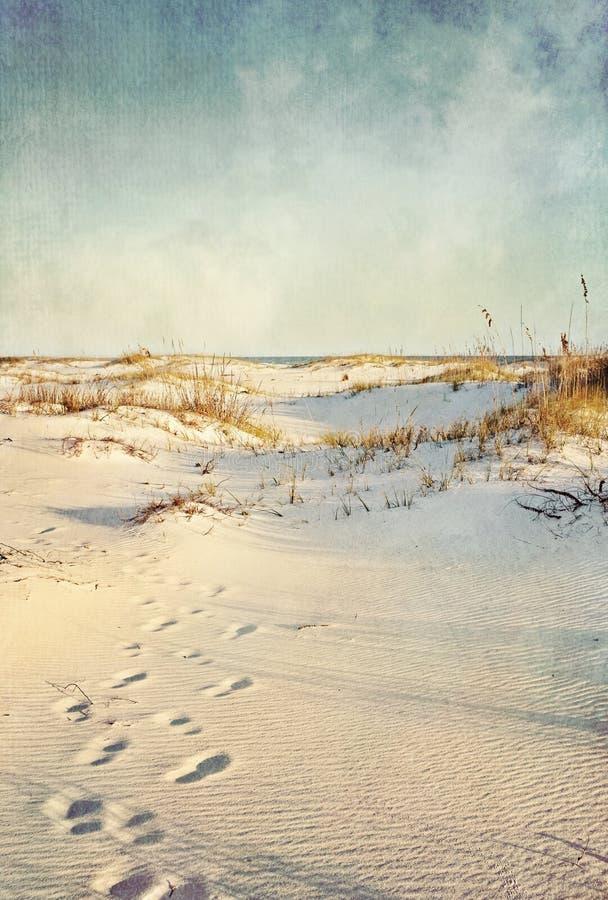 plażowy diun krajobrazu piasek textured zdjęcia stock