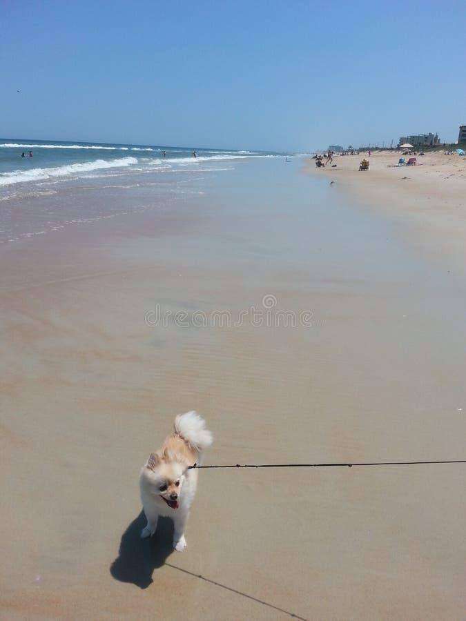 Plażowy dzień z Murphy zdjęcie royalty free