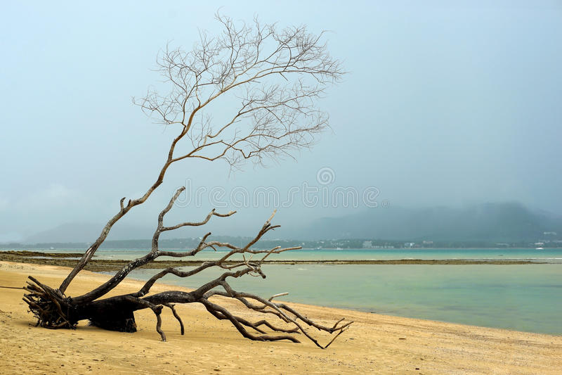 plażowy nieżywy drzewny tropikalny zdjęcie royalty free