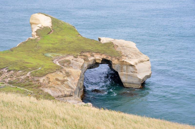 plażowy nowy tunelowy Zealand zdjęcie stock