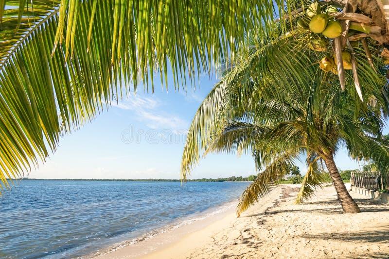 Plażowy palmy i turkusu morze przy Playa Larga Kuba fotografia stock