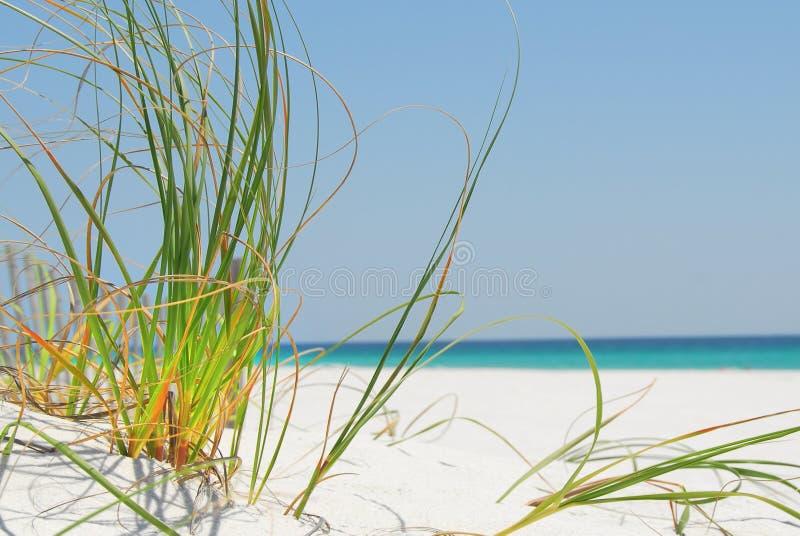 plażowy trawy Pensacola morze fotografia royalty free