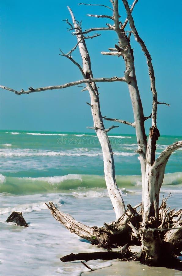 plażowy zdruzgotana zdjęcie royalty free