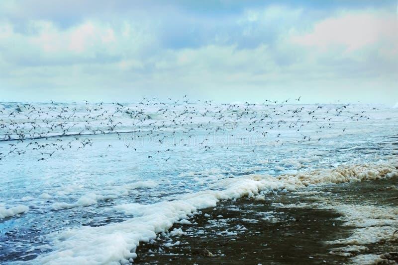 plaży długa burzy Washington zima obrazy royalty free