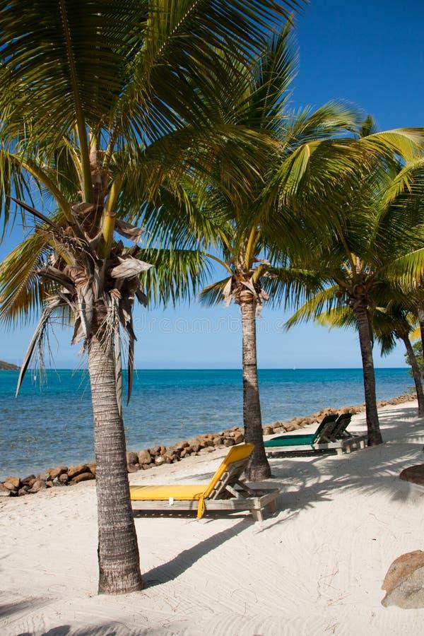 Download Plażowi drzewka palmowe obraz stock. Obraz złożonej z być - 13332639