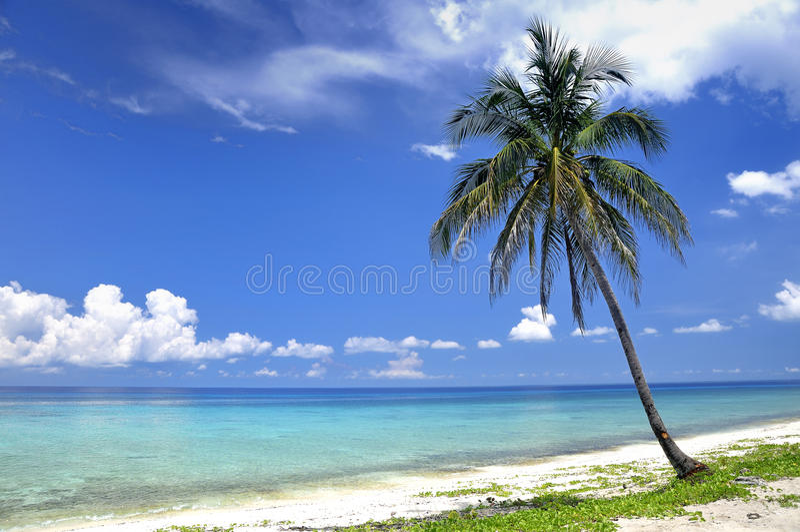 Download Plażowy tropikalny obraz stock. Obraz złożonej z relaks - 15681899