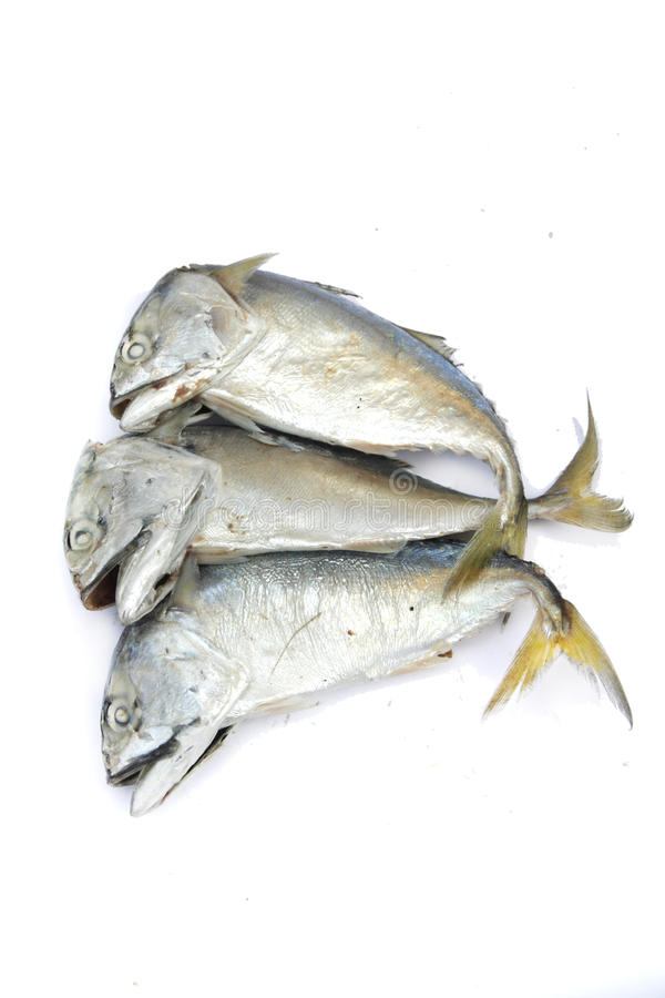 Download Pla Tuu , Thai mackerel stock image. Image of fishes - 29857699