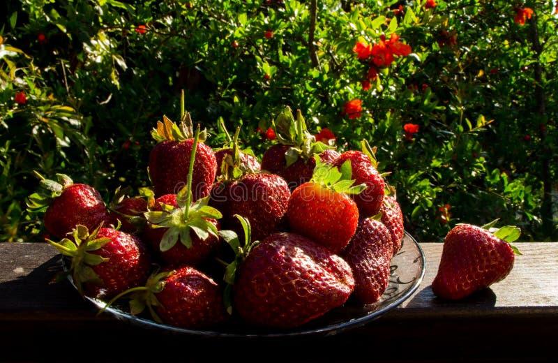 Plaat van aardbeien royalty-vrije stock foto's