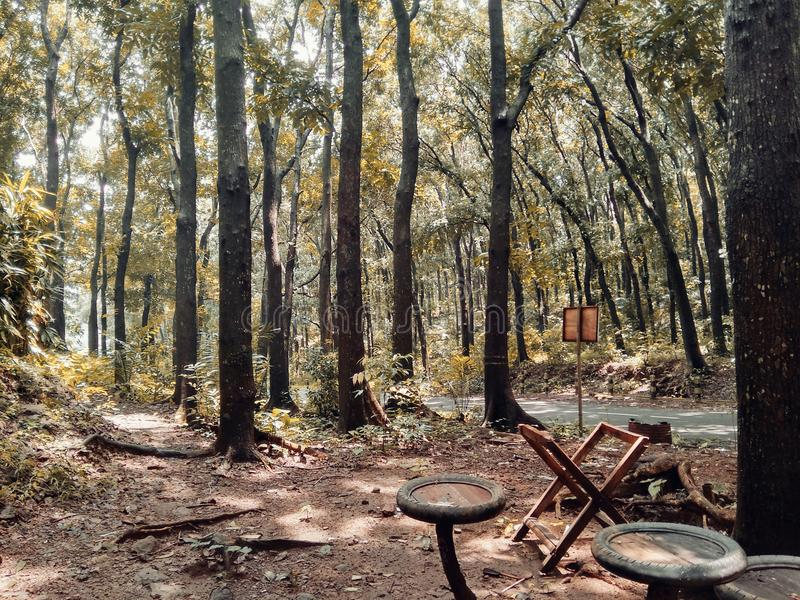Plaats in het bos te ontspannen royalty-vrije stock fotografie