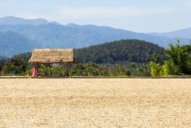 Plaats voor het drogen van koffieboon en paviljoen royalty-vrije stock fotografie