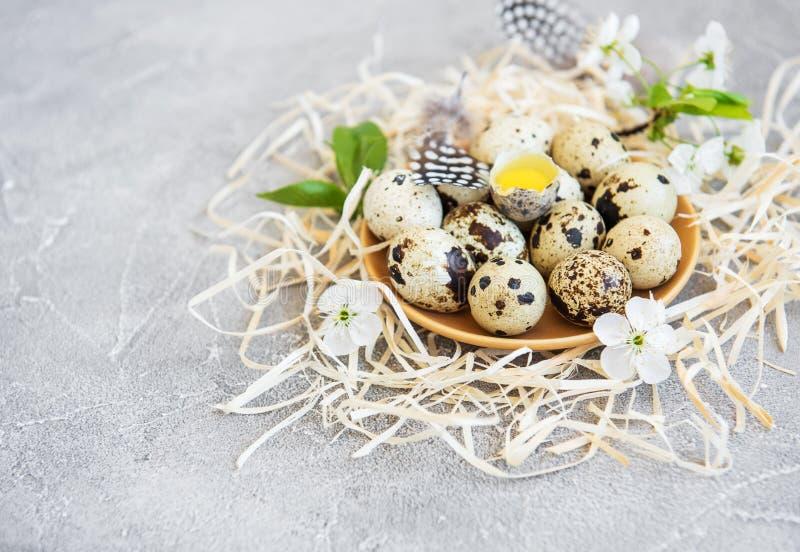 Placa con los huevos de codornices fotos de archivo libres de regalías