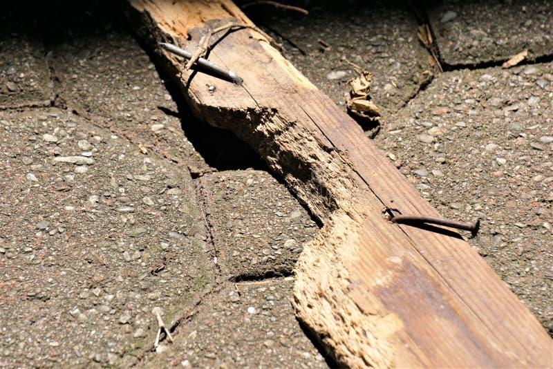 Placa danificada da fáscia dos esquilos imagens de stock