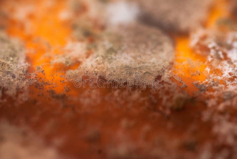 Placa das bactérias fotografia de stock royalty free