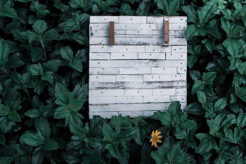 Placa de madeira vazia rústica da grão branca para escrever a licença da natureza do verde do fundo da nota imagens de stock