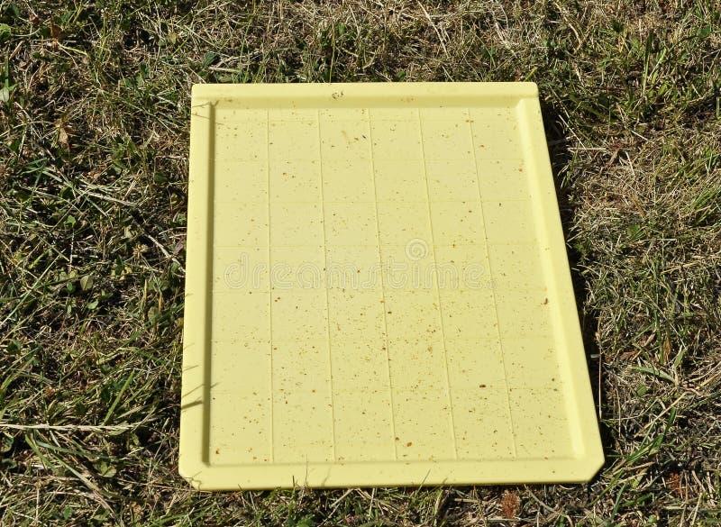 Placa de monitoração para ácaros de varroa foto de stock royalty free
