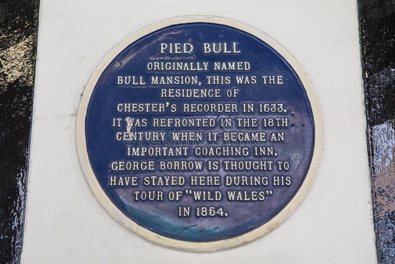 Placa de varios colores de Bull en Chester fotografía de archivo libre de regalías