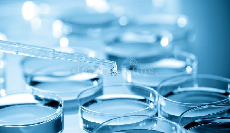 Placa del cultivo celular en bio laboratorio fotografía de archivo