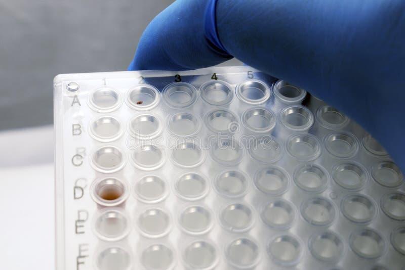 Placa do PCR fotografia de stock royalty free