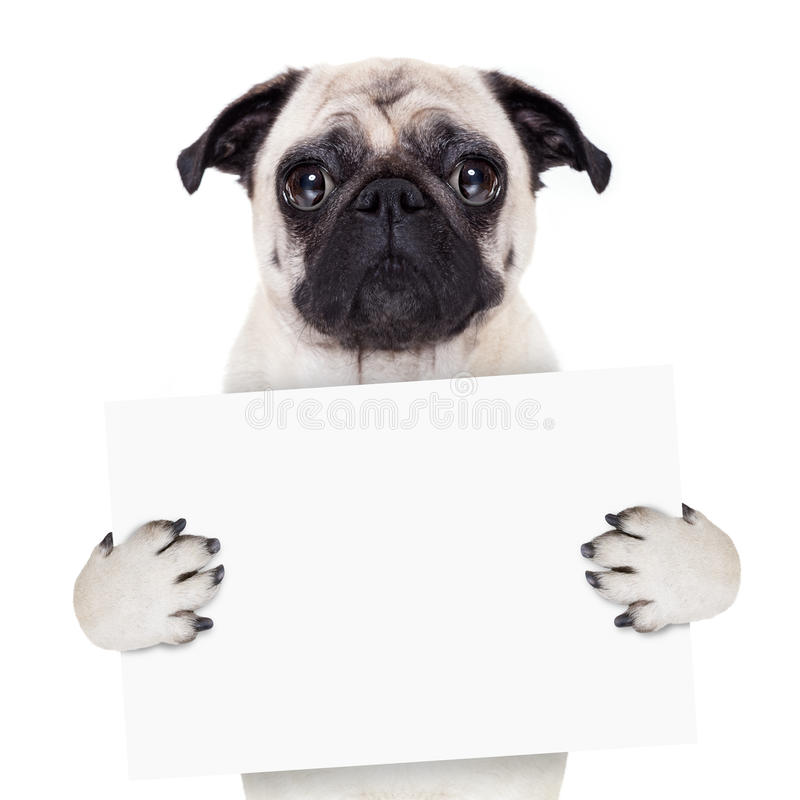 Placard banner dog stock images